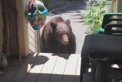 Woman uses 'mom voice' to scare bear away from porch