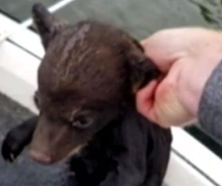 Pennsylvania fisherman saves baby bear from drowning