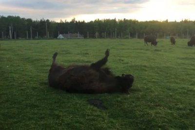 Buffalo fails to scratch the sweet spot at Canadian park