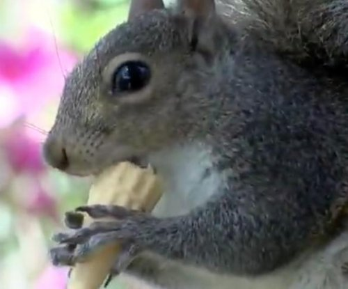 Ice cream-loving squirrel treated to daily cones from North Carolina shop