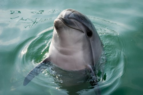 Whales, seals and dolphins followed a similar evolutionary path from land to sea