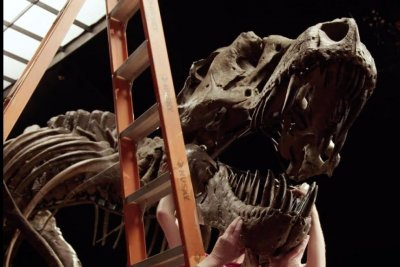 Watch: T. rex skeleton expected to fetch up to $8M at New York auction