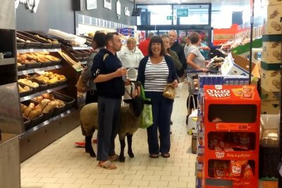 Man skirts 'no dogs' policy by bringing pet sheep into store
