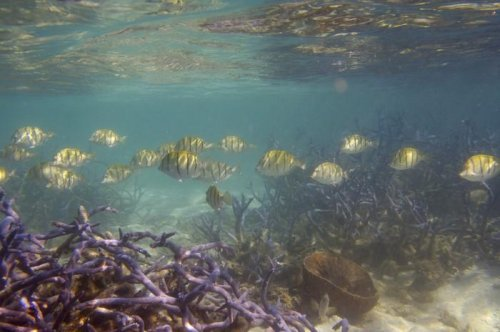Damaged coral reefs cause decline in fisheries, risks for coastal communities