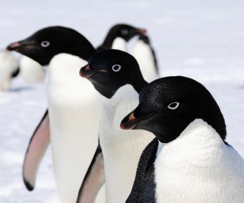 WWF: Only 2 of 18,000 Adélie penguin chicks survived summer due to ice