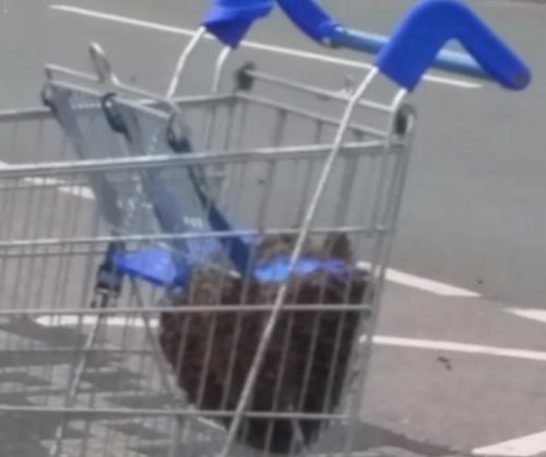 Bees swarm shopping cart outside strip mall in Wales