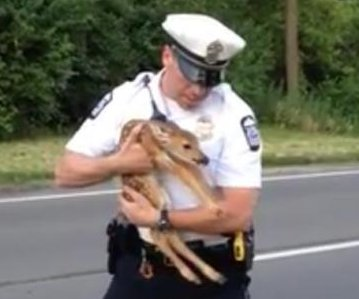 Exhausted fawn springs to life in Ohio police officer's arms