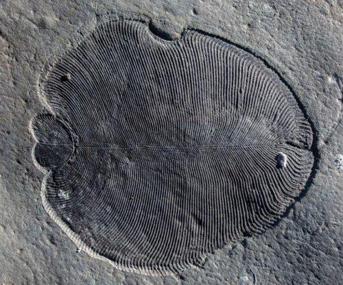 558-million-year-old fat molecule reveals world's earliest animal