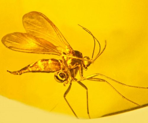 Ancient amber offers evidence of oldest orchid fossil