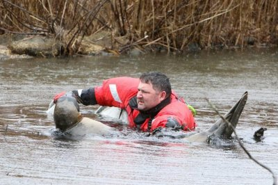 Look:-Harp-seal-rescued-from-duck-pond-in-New-Jersey