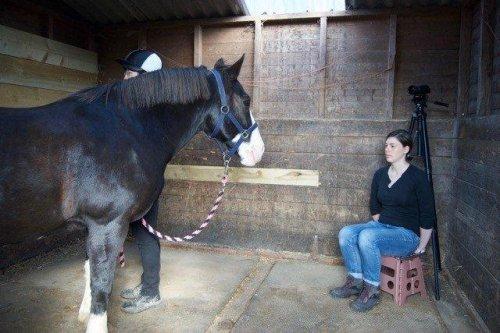 Study: Horses read, remember human faces