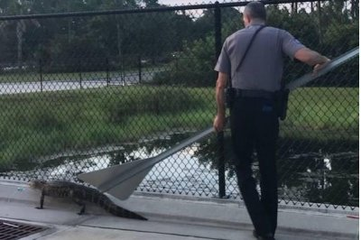 Police officer uses yield sign to escort alligator back to pond