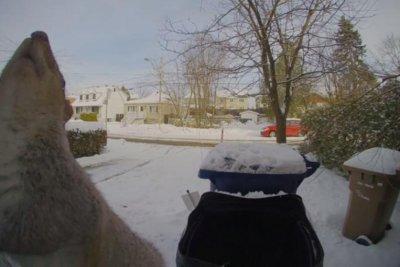 Mischievous squirrel rings Canadian couple's doorbell