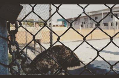 Watch:-Emu-that-went-running-on-highway-captured-on-school-tennis-court