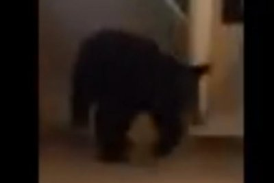 Watch:-Black-bear-visits-Vermont-hotel,-wanders-through-hall