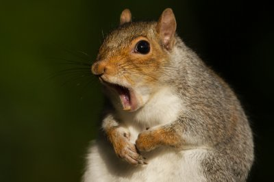 Squirrel blamed for Pennsylvania power outage