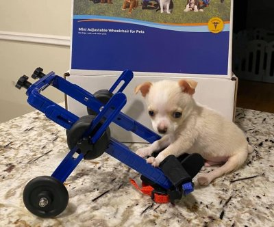 Puppy's pigeon friendship leads to custom wheelchair