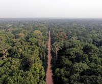 Rainforests of Central Africa unequally vulnerable to climate change, development