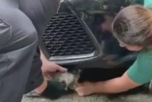 Kitten rescued from engine compartment of vehicle in New York