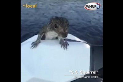 Soggy squirrel hitches ride on jet ski in New Hampshire