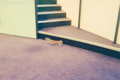 Squirrel invades London Assembly during meeting