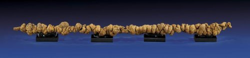 'Rare coprolite' for sale is actually really old poop