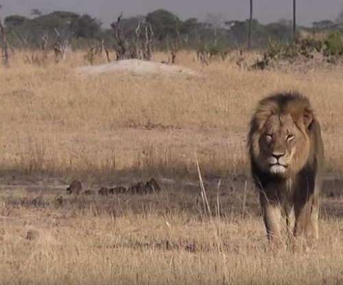 Dentist who killed Cecil the lion won't face charges