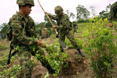 U.N. report: Colombia's coca plant production reached record levels in 2017