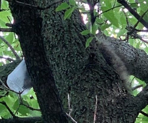 Police rescue raccoon with jar stuck on its head in Wisconsin