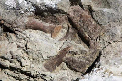 Most complete tyrannosaur fossil in Southwest excavated in Utah