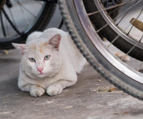 South Korean man arrested for slaughtering 600 cats