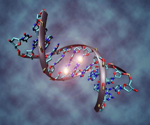 Experiments reveal how DNA methylation affects gene expression in humans