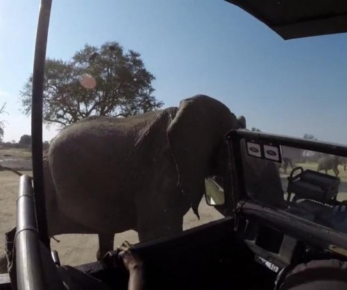 Elephant rams, spins safari truck in South Africa