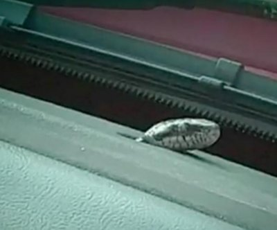 Snake crawls down South Carolina woman's leg while driving
