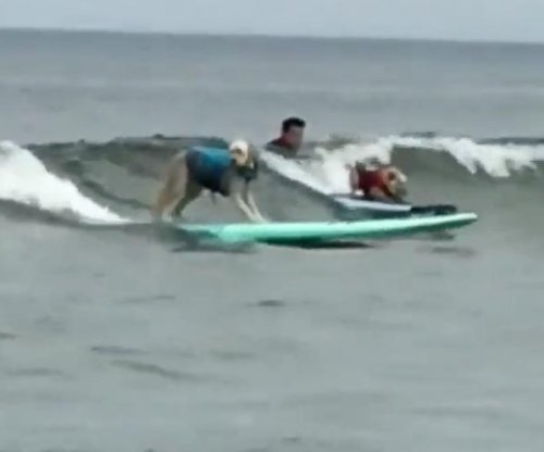 Canines catch waves at World Dog Surfing Championship