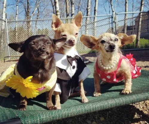 North Carolina animal organization hosts 'Senior Prom' for elderly dogs