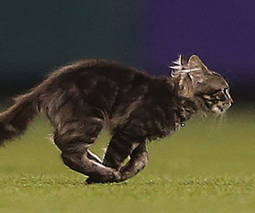 Kitten sprints across baseball field, inspires grand slam