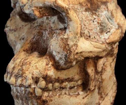 South African fossil 'Little Foot' gets new origin date