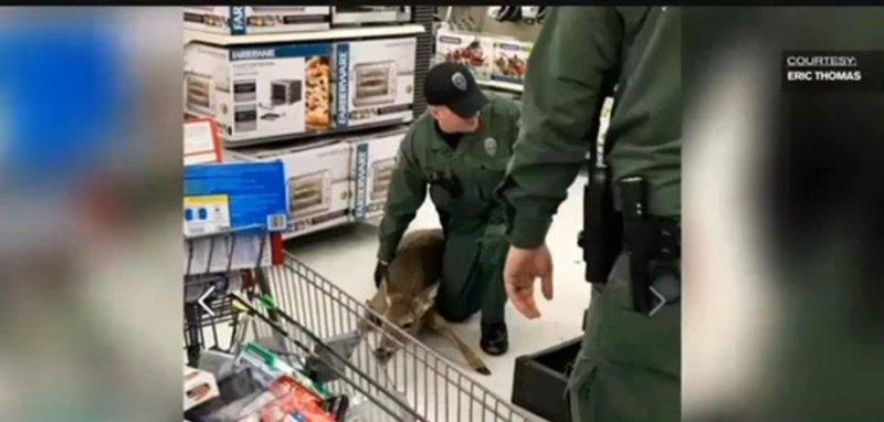 Image result for deer stuck in walmart