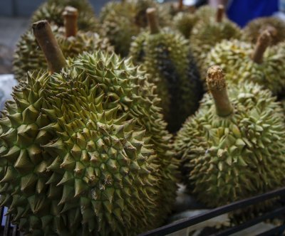 Durian fruit crash lands on truck driver in Malaysia, causing injuries