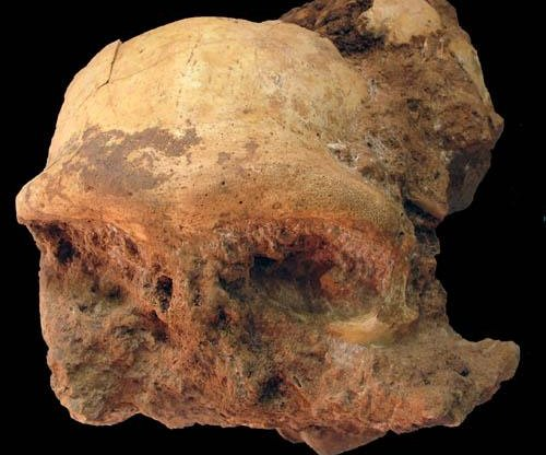 Fossilized Homo erectus skull found in China