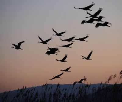 Radar reveals bird pile up on shores of the Great Lakes