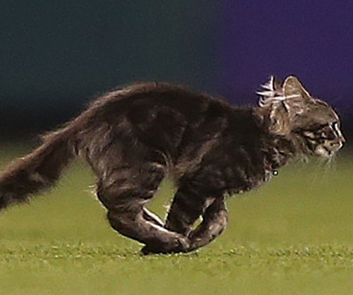 St. Louis 'Rally Cat' missing after appearance at Cardinals game