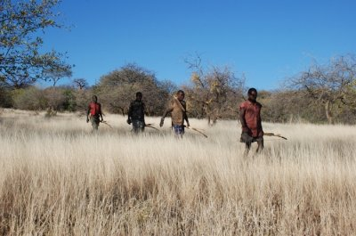 Humans, when hunting or foraging, move in same pattern animals use