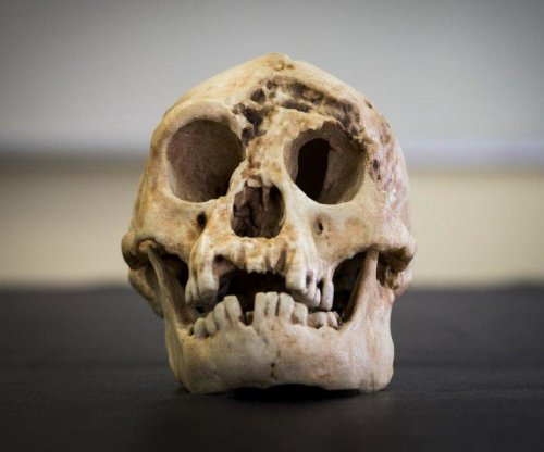 Indonesian hobbit evolved from African ancestor