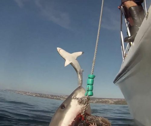 5 strange shark encounters