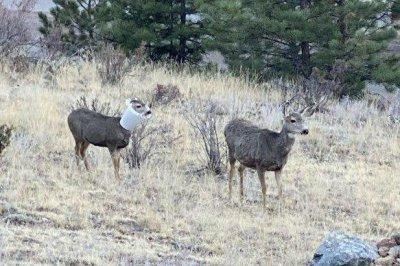 Deer rescued with head stuck in bird feeder