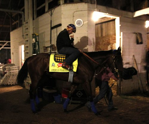 American Pharoah arrives to prepare for Breeders' Cup