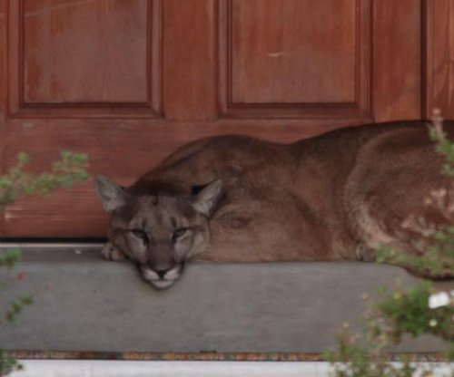 Mountain lion found napping on Utah couple's front porch