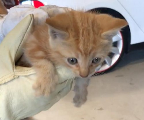 Tesla mechanic rescues kitten trapped inside Model X bumper